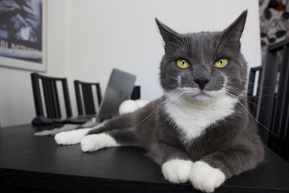 kat op tafel ism makelaars