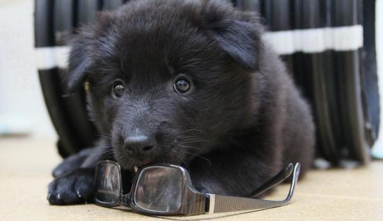 puppy ism makelaars