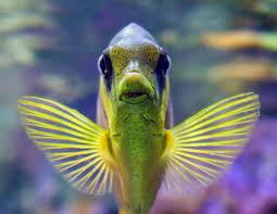 vis ism makelaars